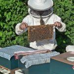fabrica de colmenas - apicultor