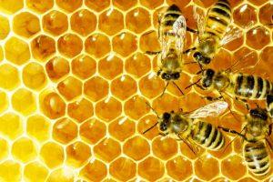 alimentos para abejas - panal