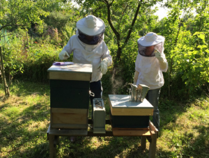 asesoramiento a apicultores - campo