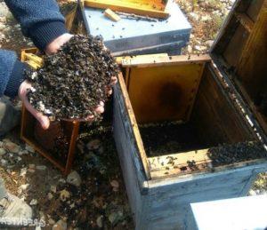 gestión de residuos de colmenas - restos